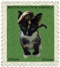 kitten scouts of america
